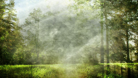 Magical Forest Background Loop Animation