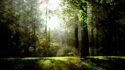 Magical fantasy nature background Image
