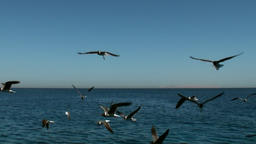 Birds over surface of sea water Footage