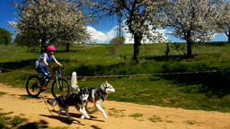Girl on a bycicle number 45 running along with dog in slow motion 영상물