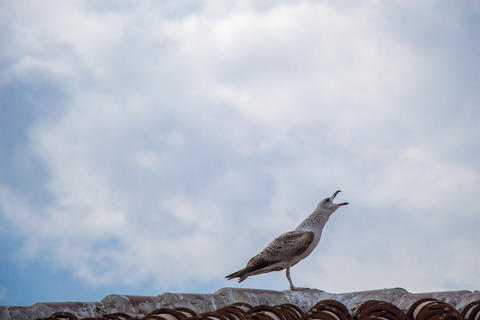 Single seagull sitting on the roof フォト
