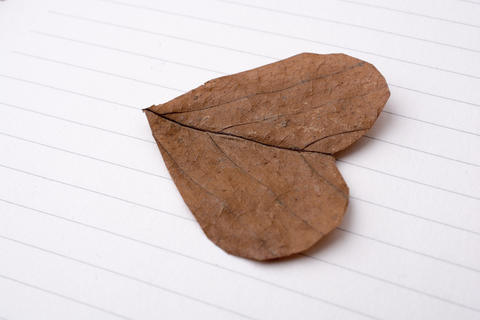 Heart shaped cut leaf on paper Photo