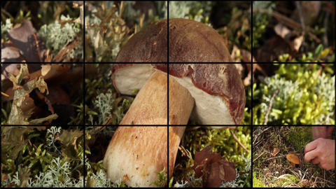 mushrooms and berries Stock Video Footage