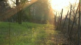 Green Backyard Zoom-out stock footage