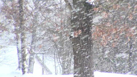 Winterforest Stock Video Footage