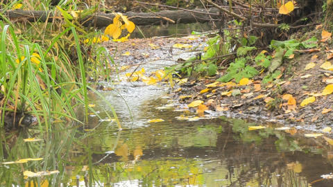 Autumn leaves in water Footage