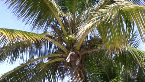 palms Stock Video Footage