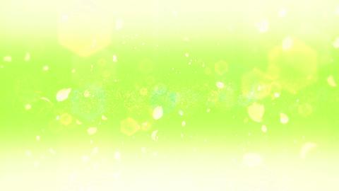 cheery blossom Defoucus Light 01E Stock Video Footage