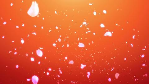 cheery blossom Light 02C Stock Video Footage