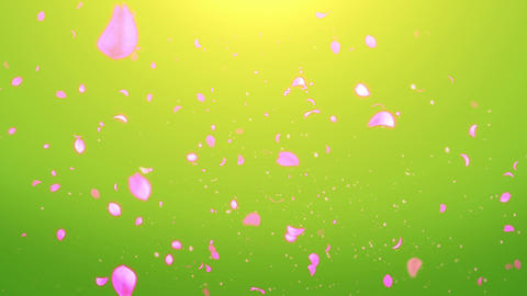 cheery blossom Light 02E Stock Video Footage