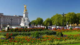 Pan from the Victoria Memorial to Buckingham Palace with lawns and flowers in th Footage