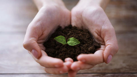 close up of woman hands holding soil with sprout Footage