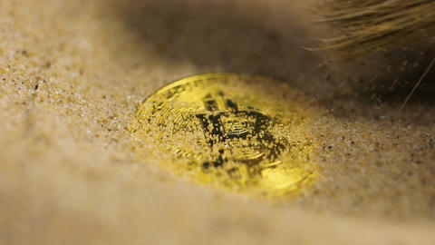 Brush Cleans up Future Currency Bitcoin Real Model Archivo