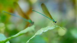Focus Focal on dragonfly in rainforest Footage