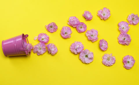scattered pink buds of almond trilobate from a small metal bucke Photo