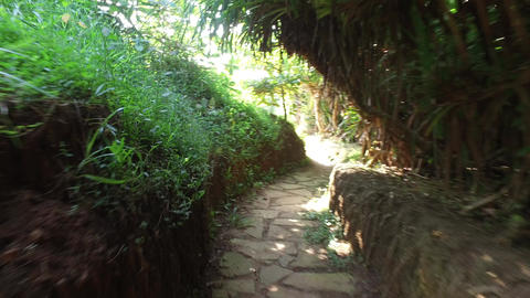 Road Or Path Through Sri Lanka Forest stock footage