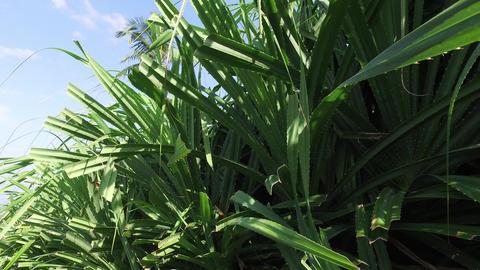green wild plant on sri lanka Footage