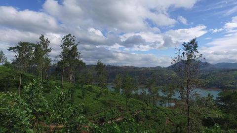 tea plantation hills on Sri Lanka Footage