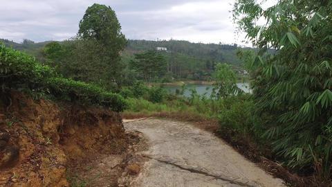 Road And Tea Plantation Field On Sri Lanka stock footage