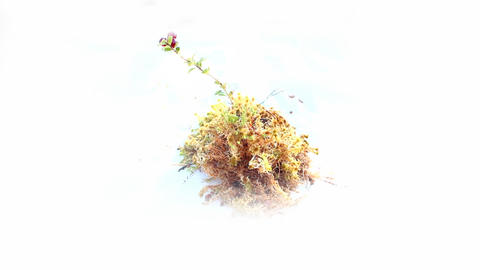 Cranberries and moss. Natural element of design to your virtual garden Footage