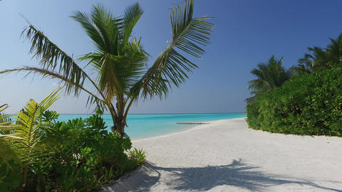 access to sea on maldives beach with palms trees Footage