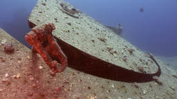 Shipwrecks Salem Express shipwrecks underwater in the Red Sea Footage