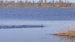 birds fishing in Florida lake Footage