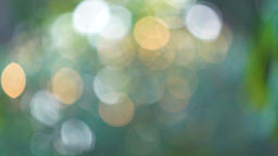 Beautiful green nature background. Sun shines through blowing on wind green GIF