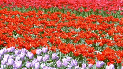 Tulip 23 ライブ動画