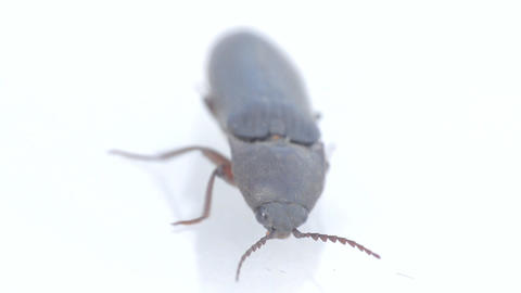 Impotence of power. Strong beetle is stalling on glass surface Footage
