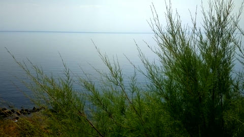 Green tamarisk from desert on the shore of blue lake Footage
