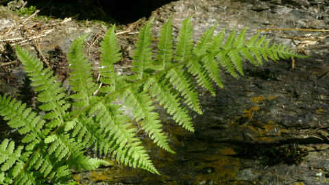 Fern with sunlight and shades Footage