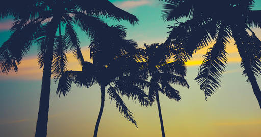 Retro Style Hawaii Palm Trees, Stock Animation