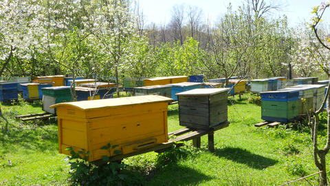 Bees on an apiary near hives on a Sunny day Footage