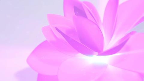 Pink Flower Background CG動画素材