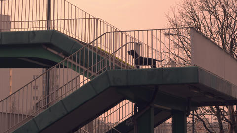 hound on pedestrian crossing GIF