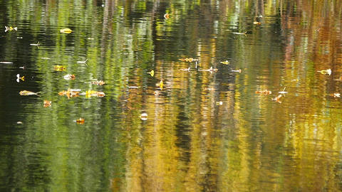 Autumn leaves floating on the water Live Action