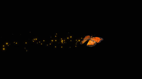 Butterfly Orange V1 blur Animation