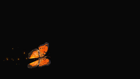 Butterfly Orange V3 blur Animation