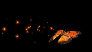 Orange butterfly various flying Ani sets After Effects Project