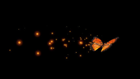 Orange butterfly various flying Ani sets After Effects Template