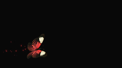 Butterfly Red V3 blur Animation