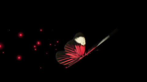 Red butterfly various flying Ani sets After Effects Template
