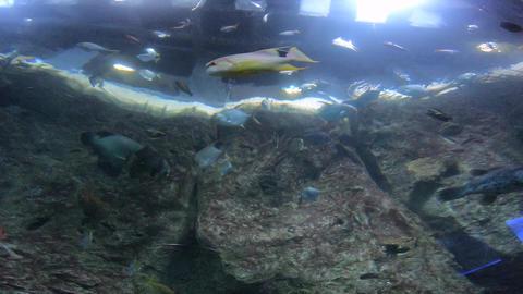 The aquarium & Beautiful fish Live Action