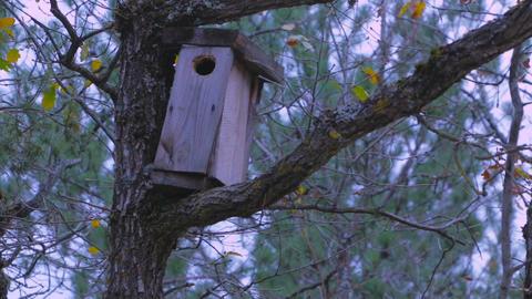 Forest birdhouse GIF
