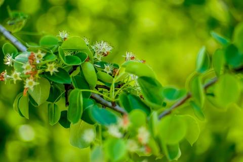 Verdurous Green Leaves, branch, tree, grass, light, mint, pattern, apple フォト