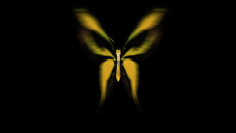 Butterfly Yellow Front Stock Video Footage