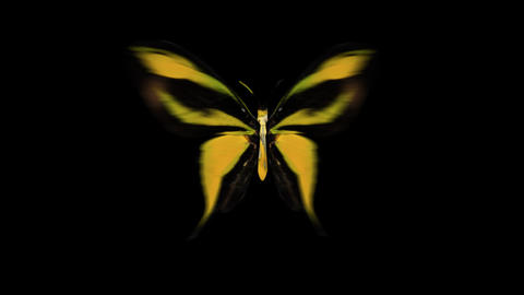 Butterfly Yellow Front Animation