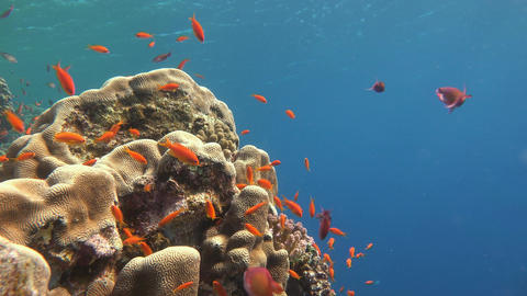 Gorgeous colorful coral reef Live Action