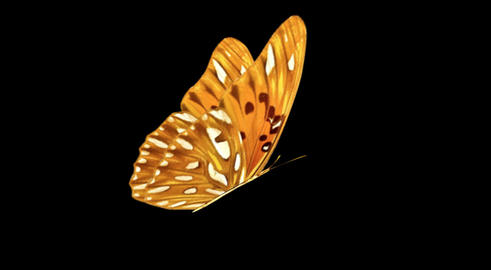 Butterfly OrangeRed CU blur Animation